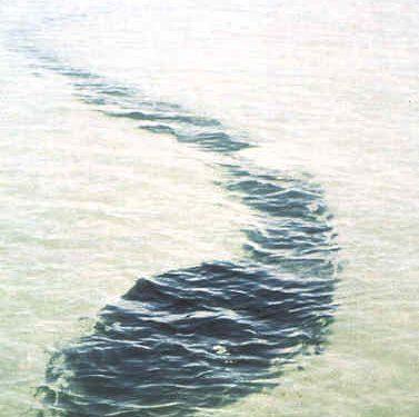 Bernard Heuvelmans sulla scia del Serpente di Mare