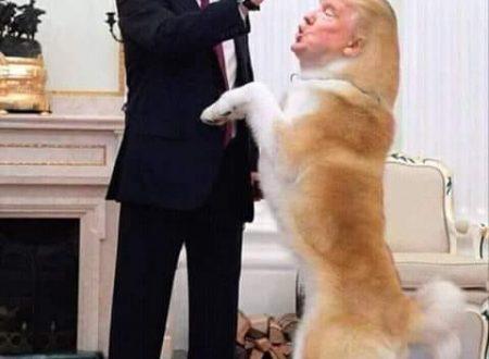 Trump è un masochista o è solo stupido?
